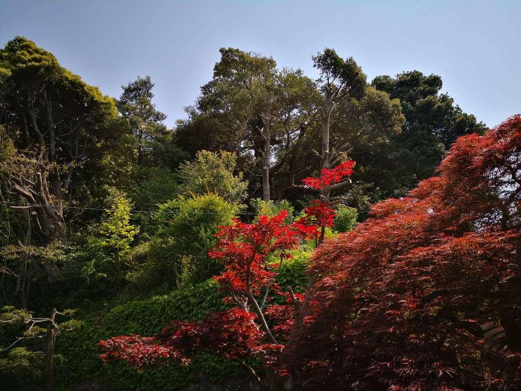 尾山台宇佐神社の庭園
