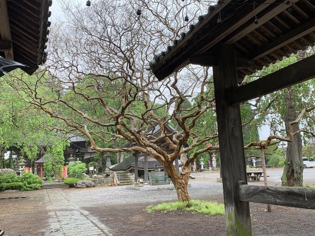 崇真寺(開運犬り切不動尊)の庭園