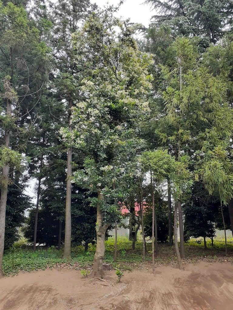 伏木香取神社の自然