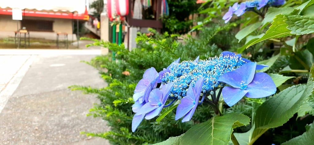 導きの社 熊野町熊野神社の自然
