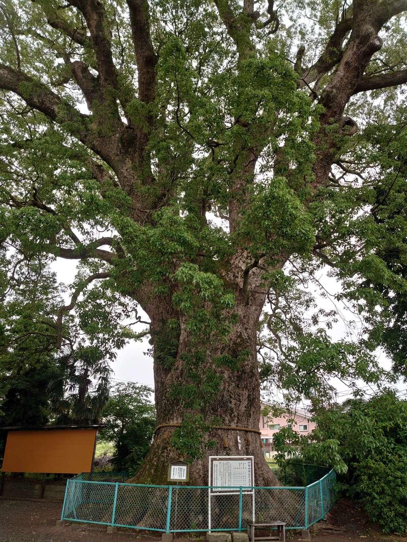 伊勢神明社の自然