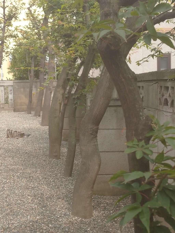 元郷氷川神社の自然