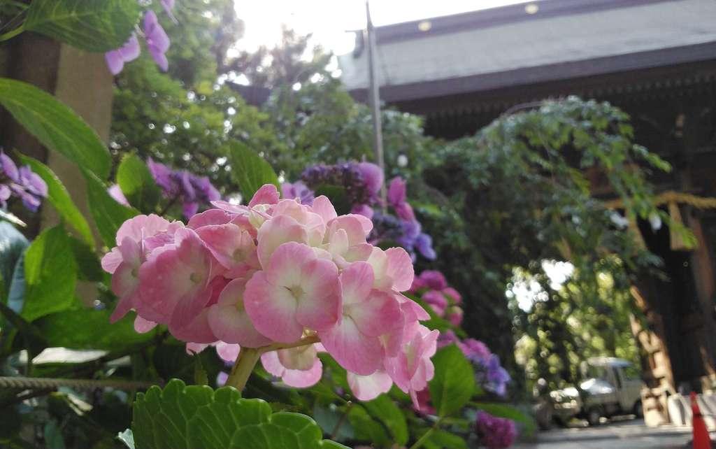 小倉祇園八坂神社の自然