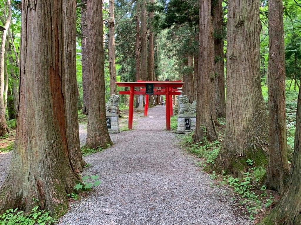 桜松神社の自然