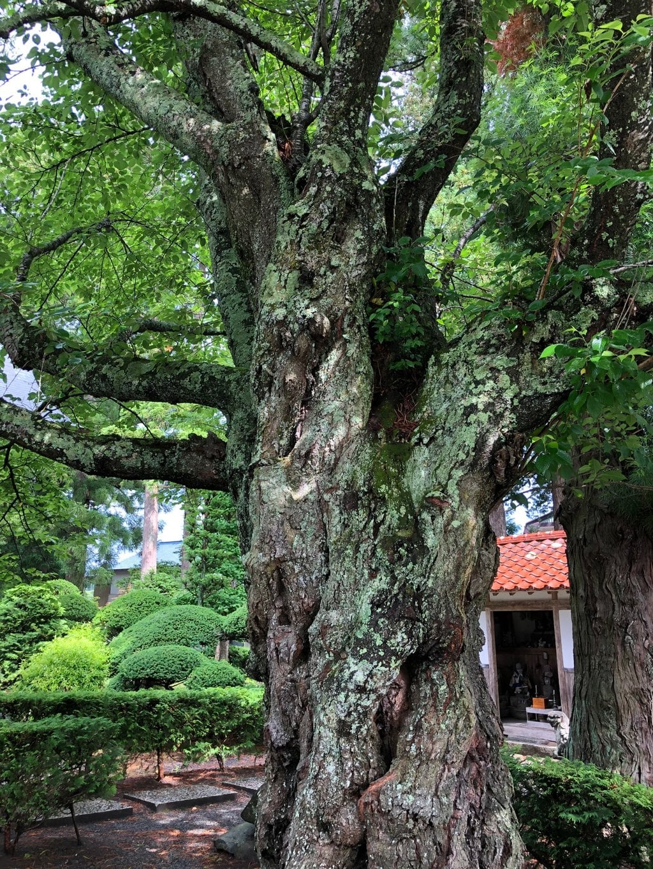 常堅寺(岩手県)