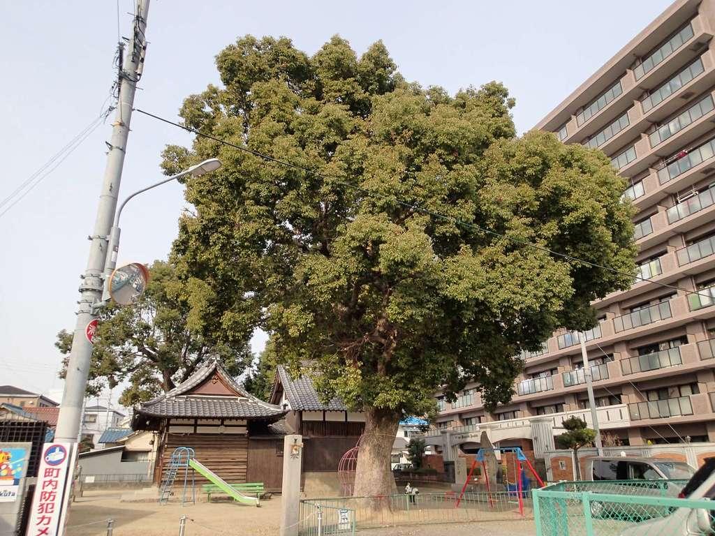 大津神社の自然
