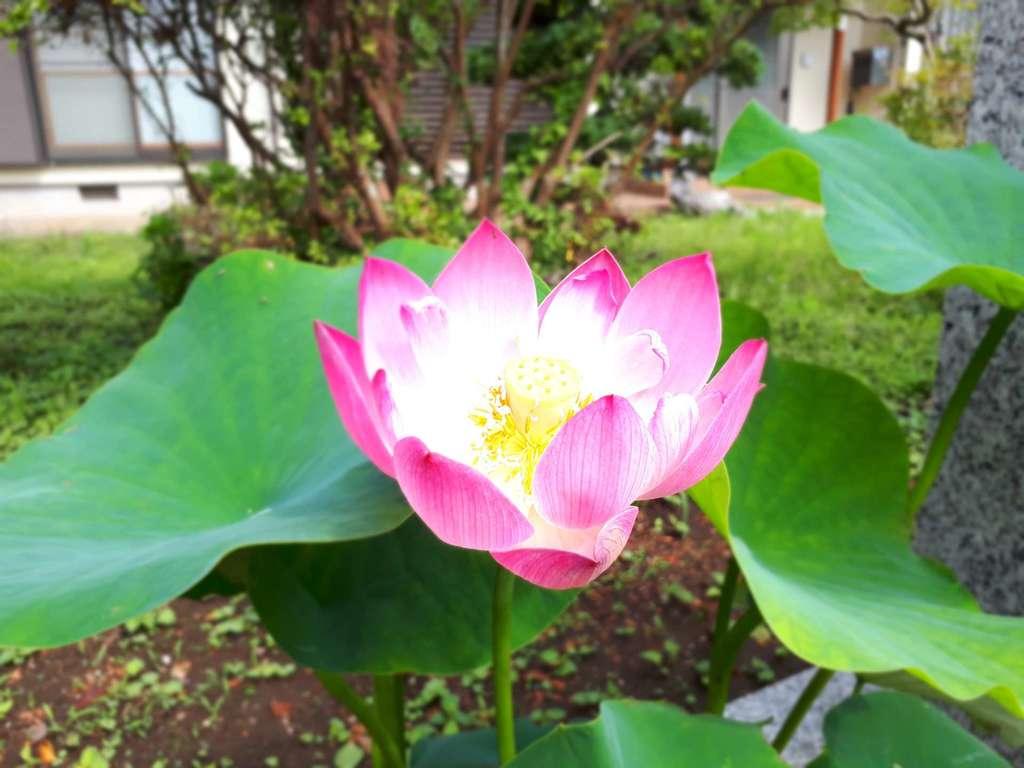 蓮久寺の自然