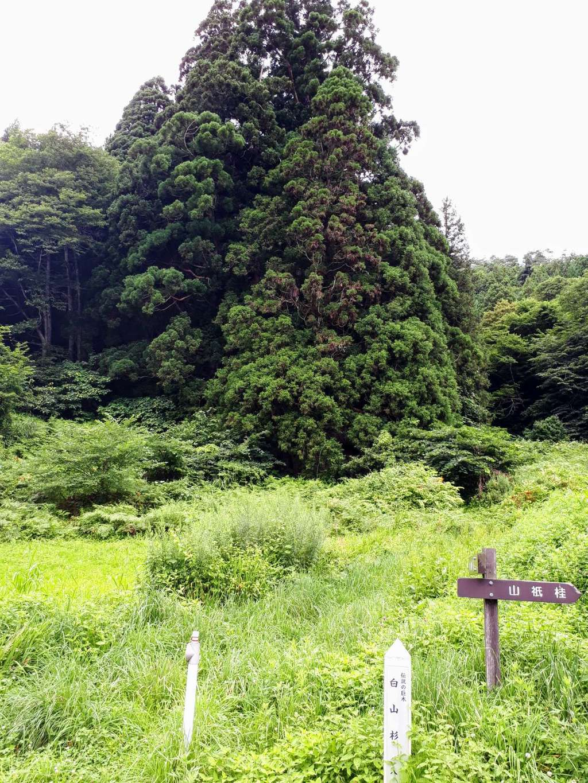早池峯神社の自然