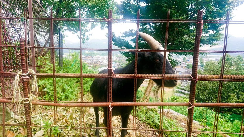 賀茂別雷神社の動物