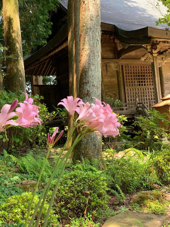 國分寺の自然