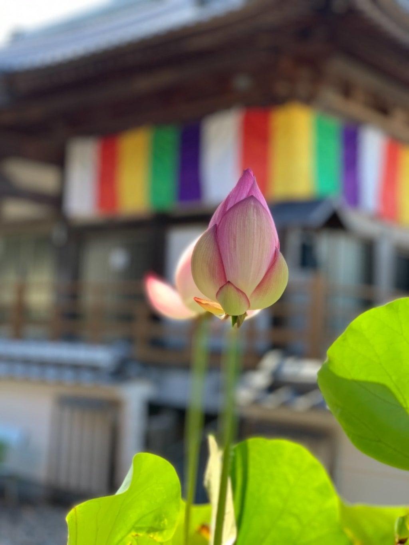 岩本寺の自然