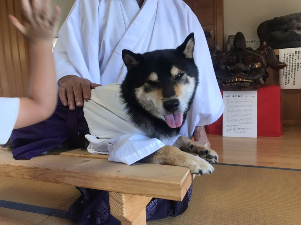 日本唯一香辛料の神 波自加彌神社の動物