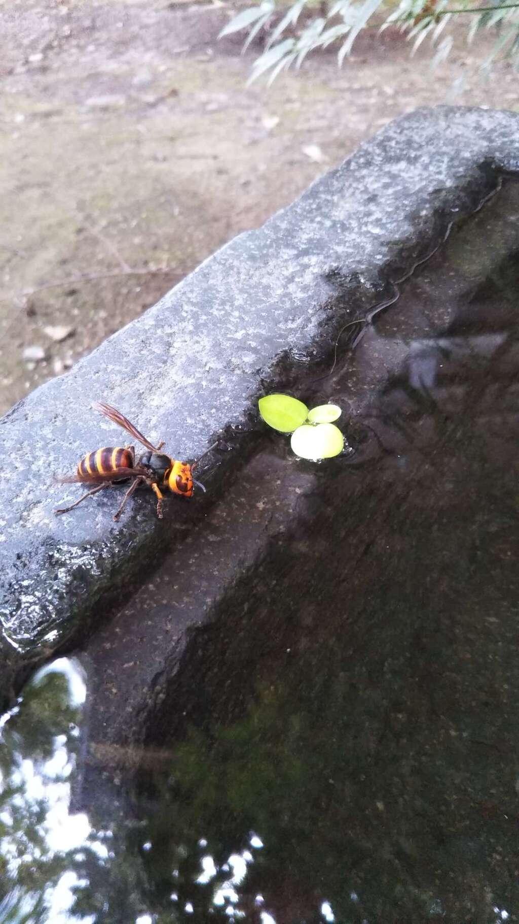 行田八幡神社の動物