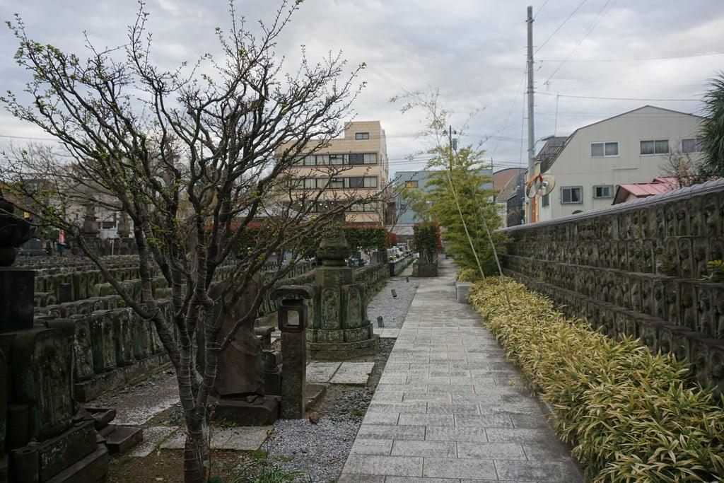 浄名院の景色