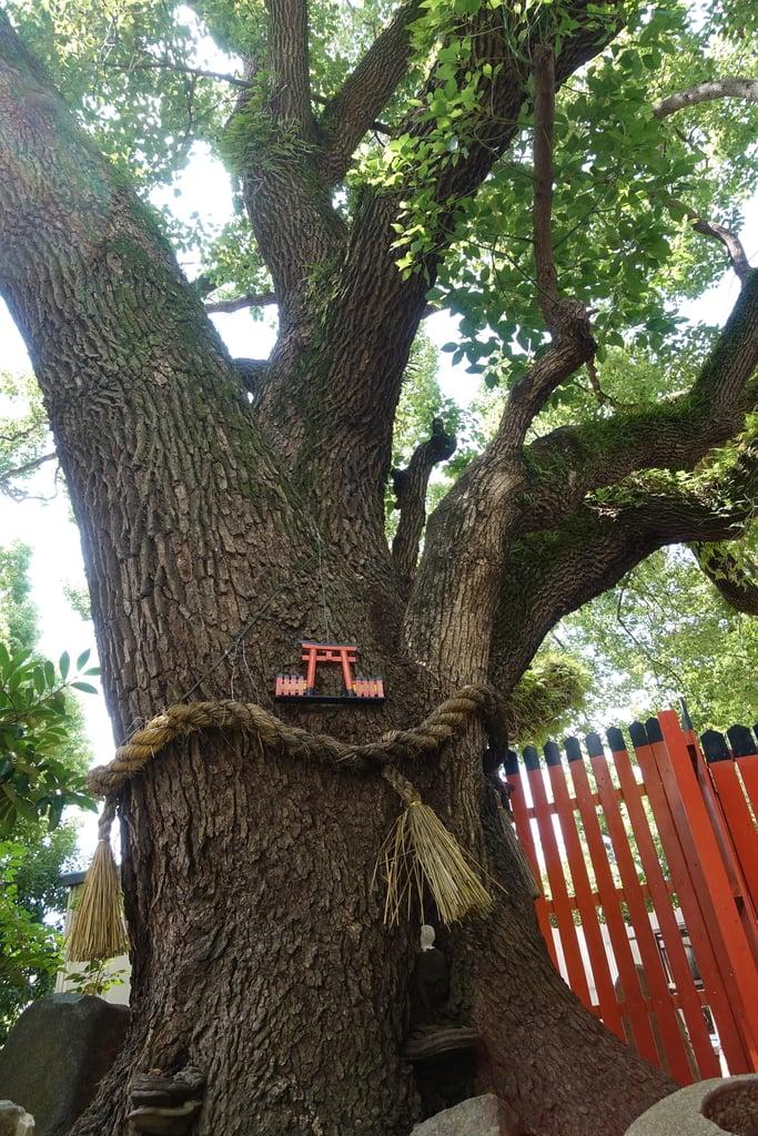 末廣稲荷神社の自然