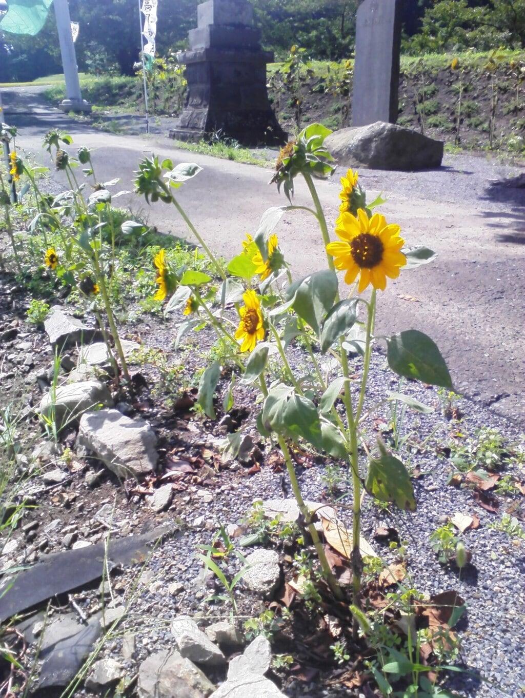高司神社〜むすびの神の鎮まる社〜の庭園