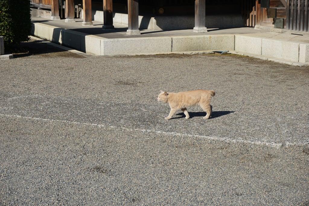 赤羽八幡神社の動物