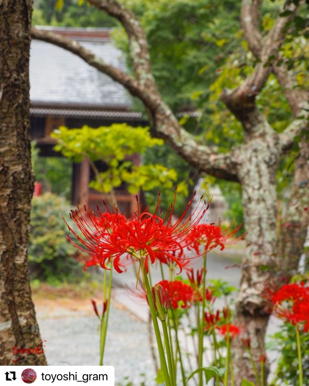 普門寺(切り絵 御朱印の寺)の自然