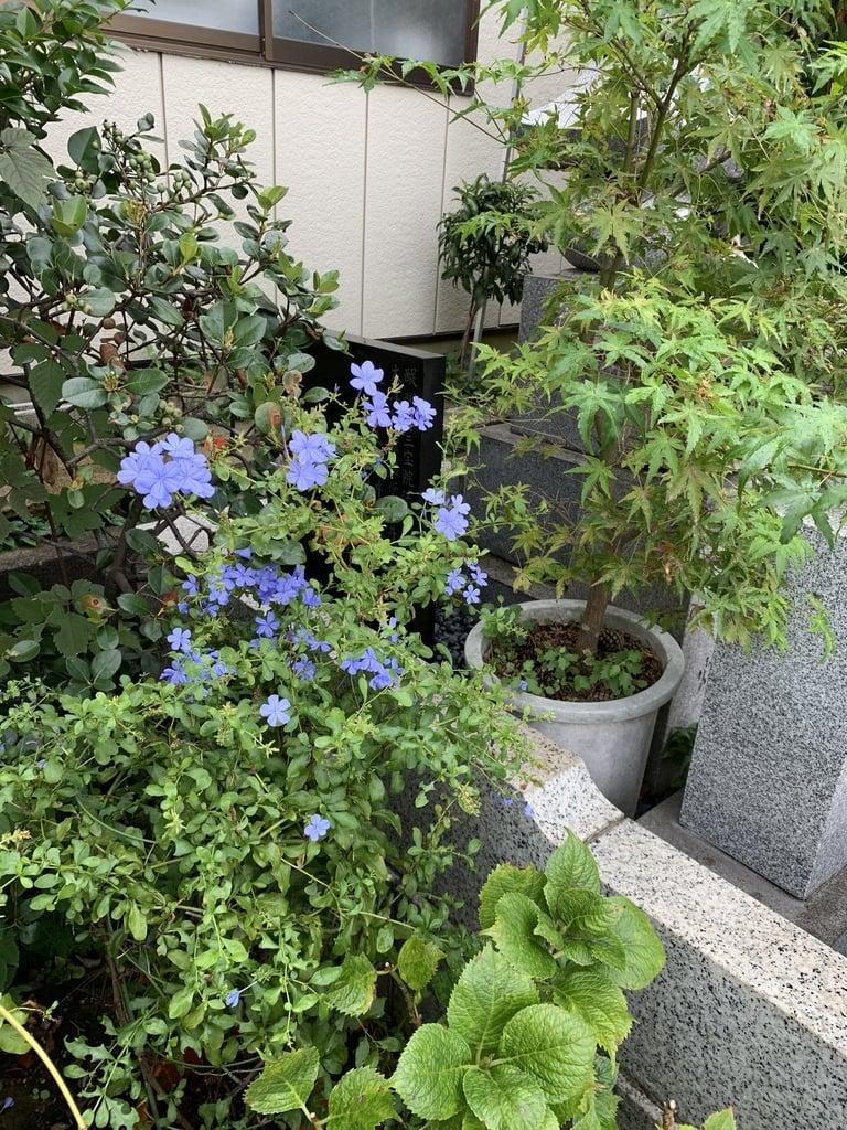 豊受稲荷本宮の庭園