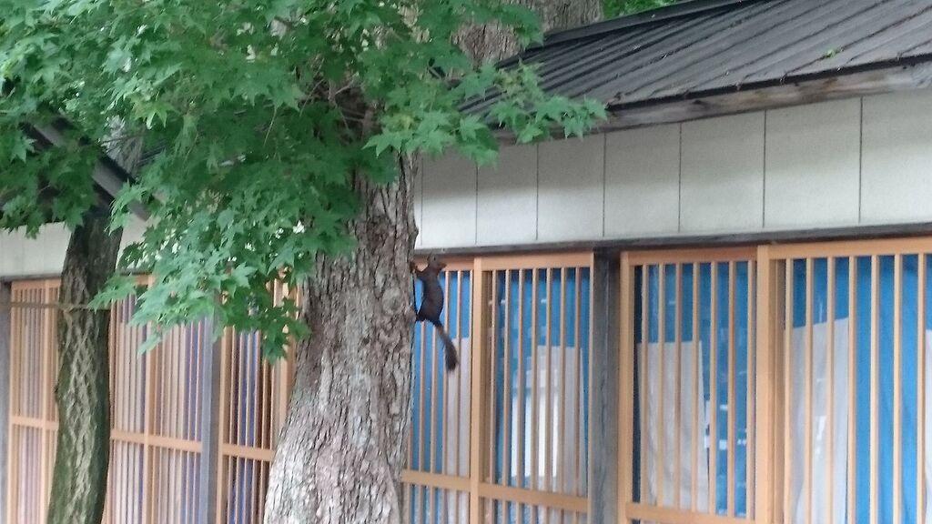千歳神社の動物