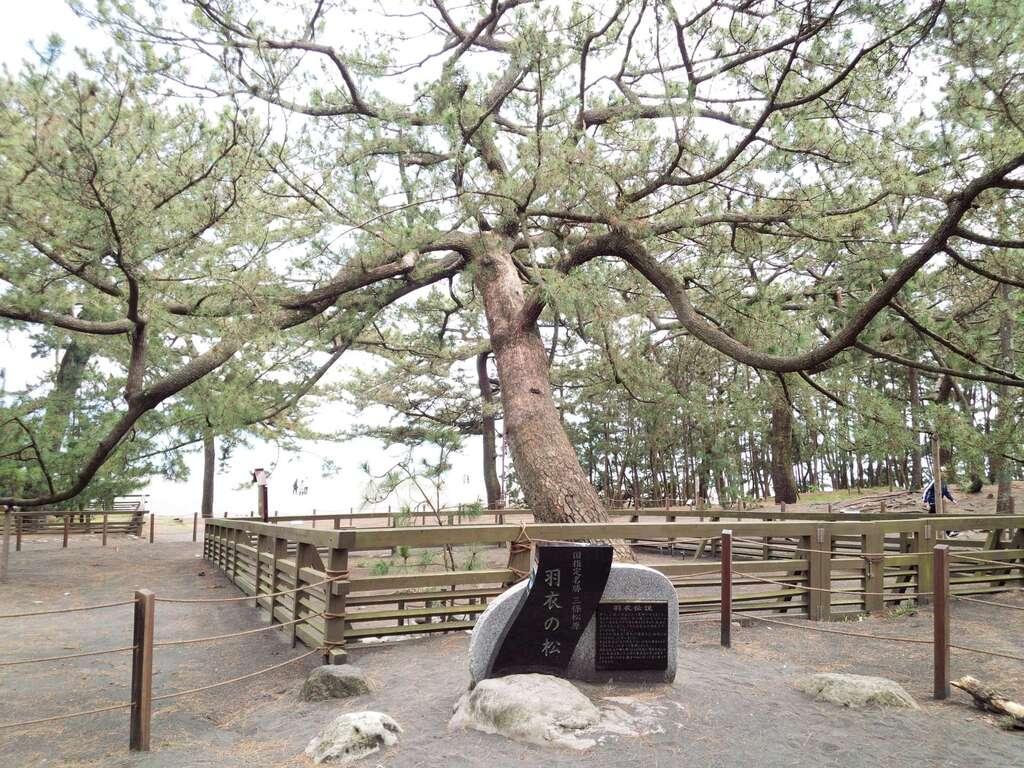 御穂神社の自然