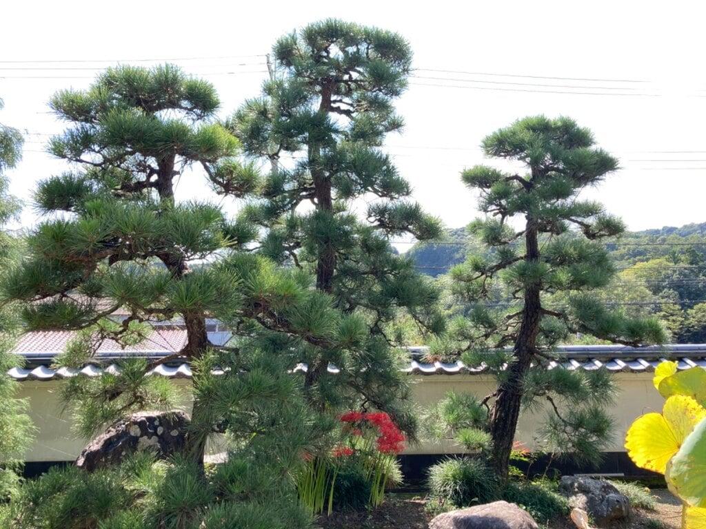瀧泉寺の建物その他