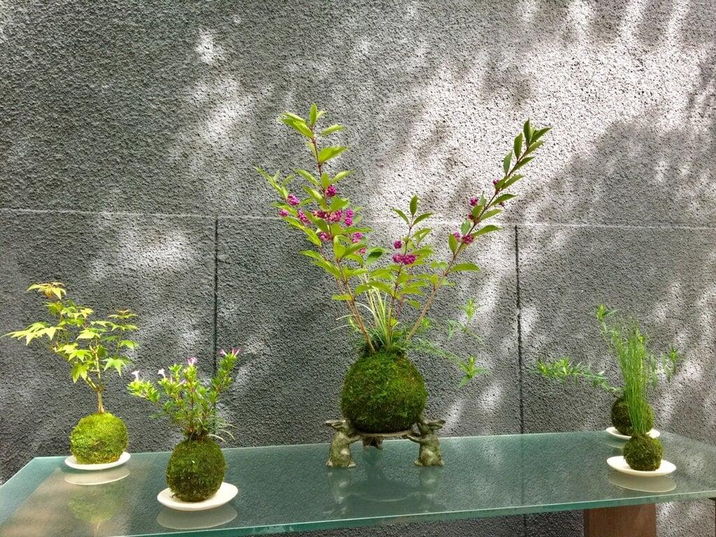 陽運寺の自然