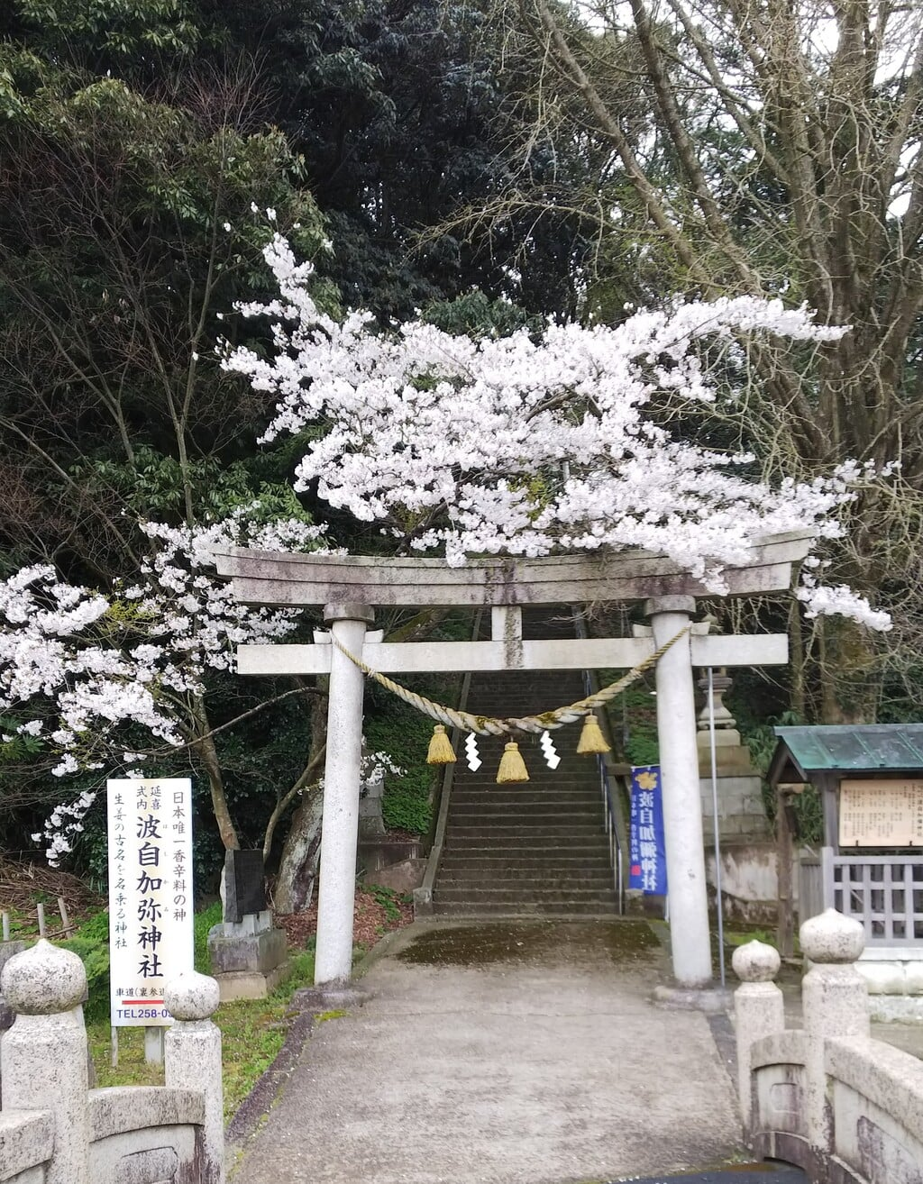 日本唯一香辛料の神 波自加彌神社の鳥居