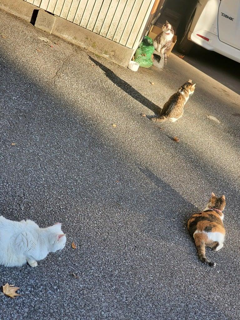唐澤山神社の動物