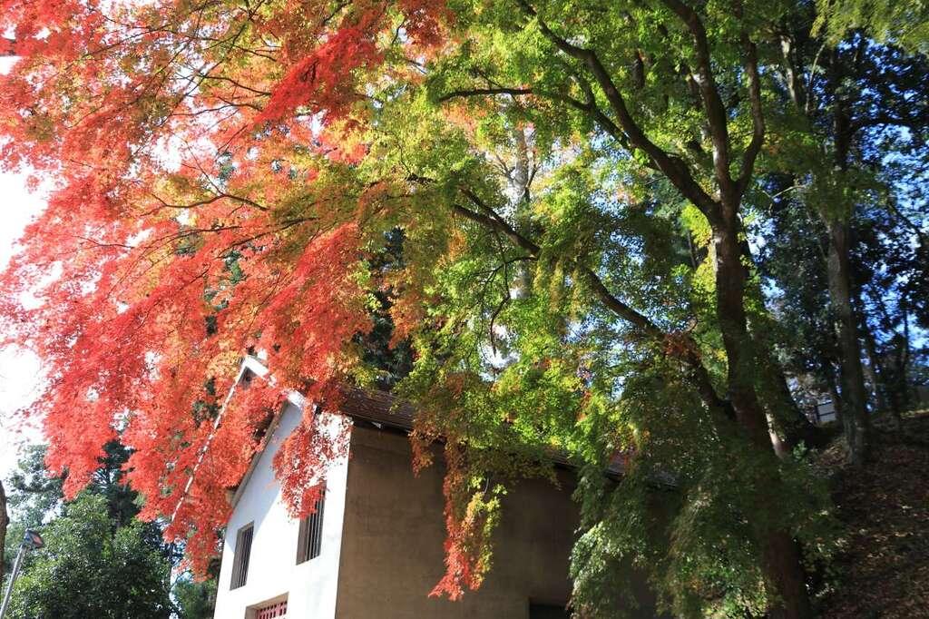 田村神社の自然