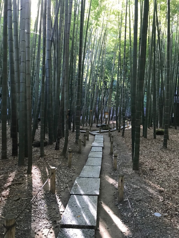 報国寺の自然