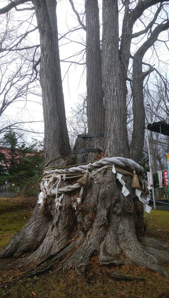 清里神社の自然