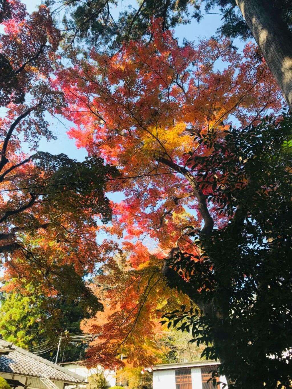 熊野本宮大社の自然