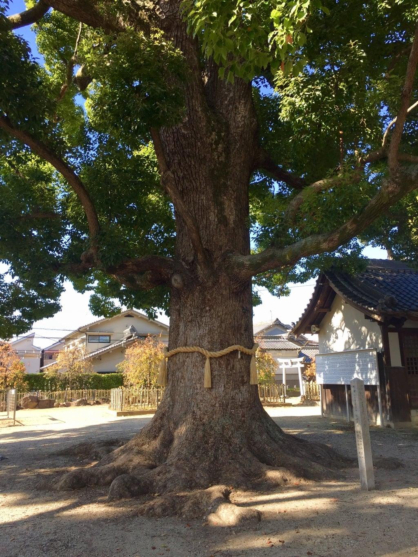 華表神社の自然
