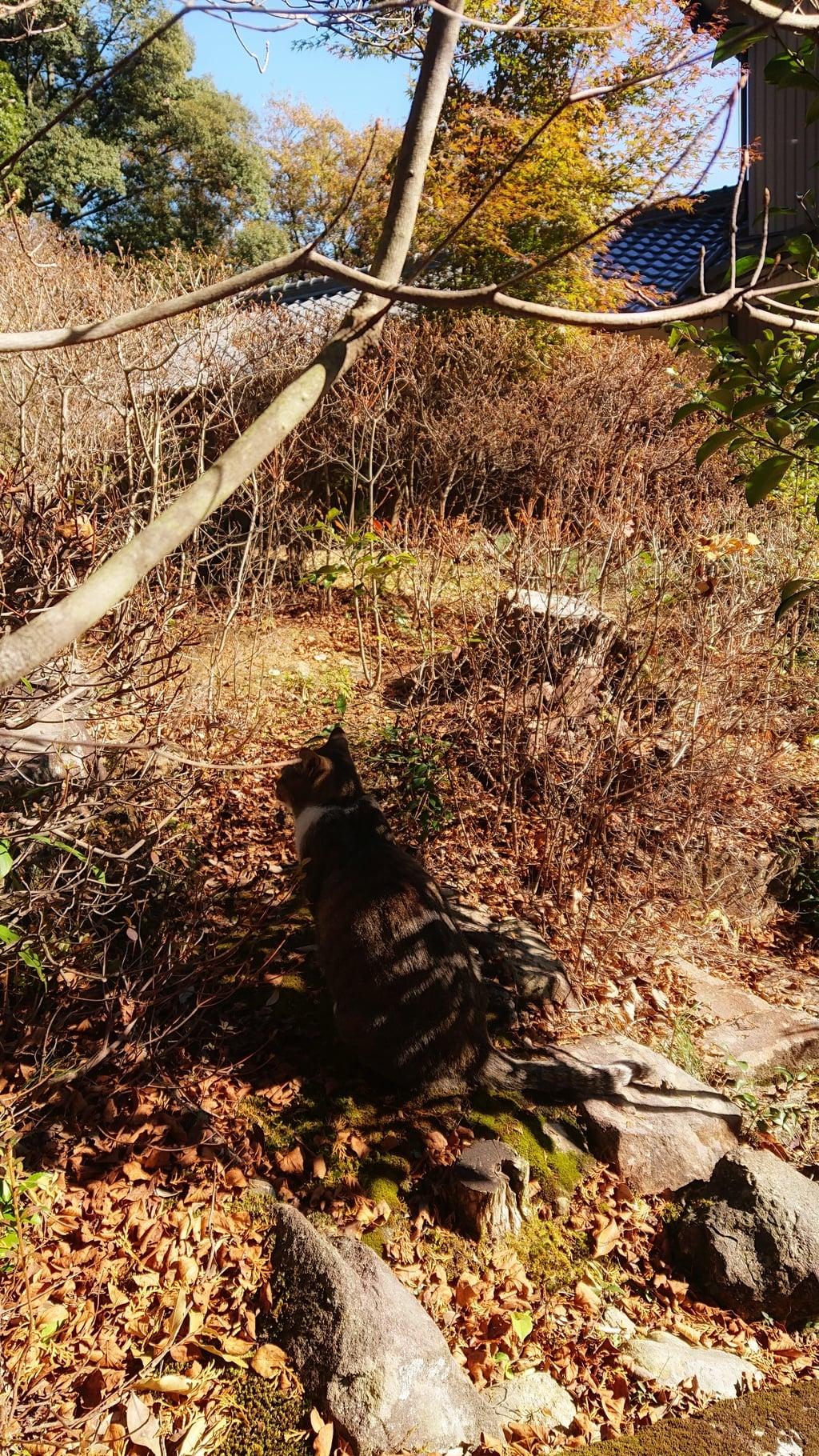 玉野御嶽神社の狛犬