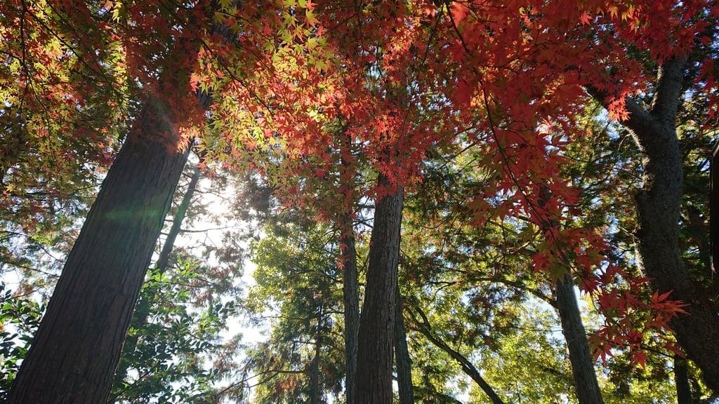 玉野御嶽神社の自然