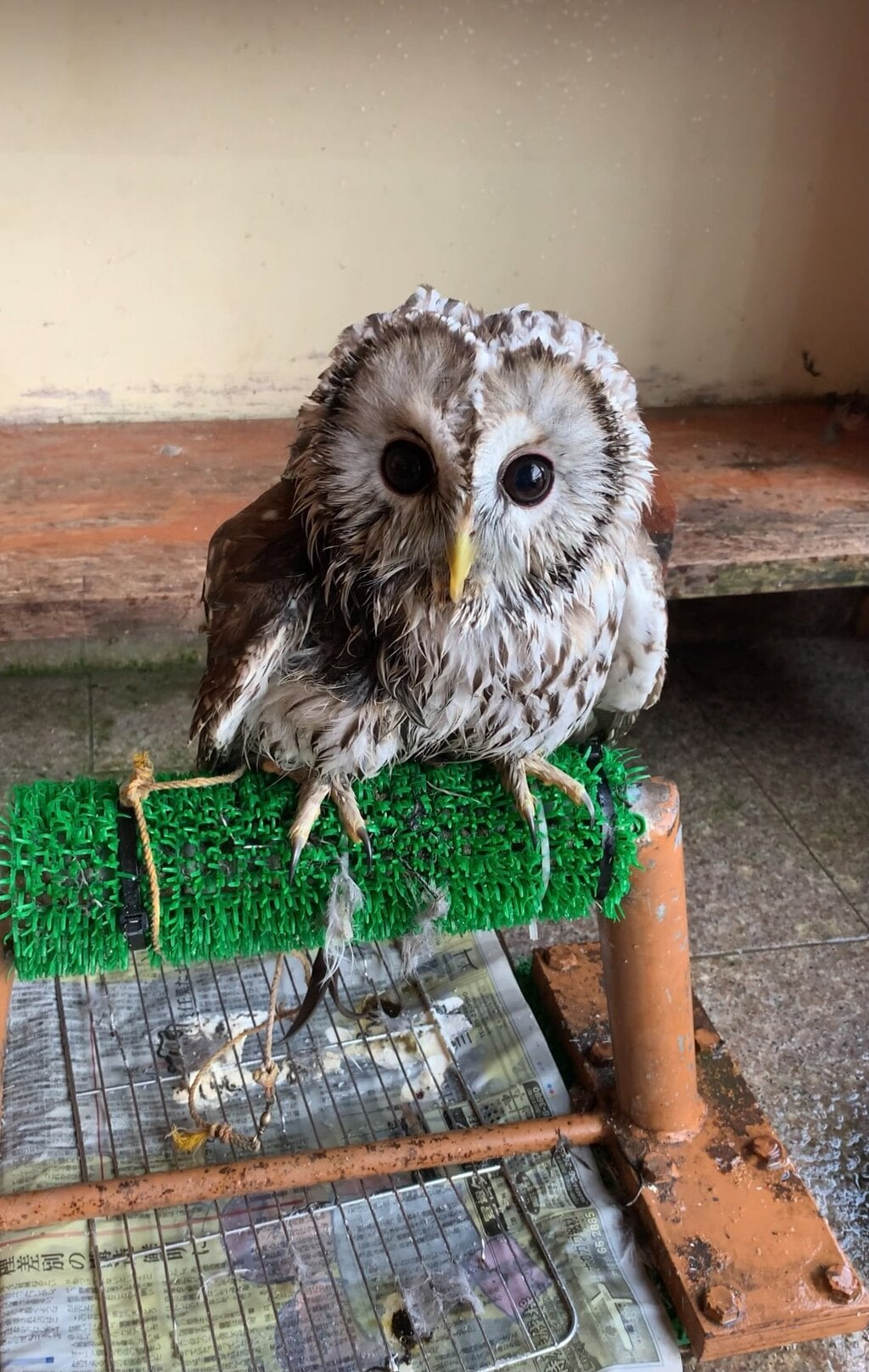諏訪神社の動物