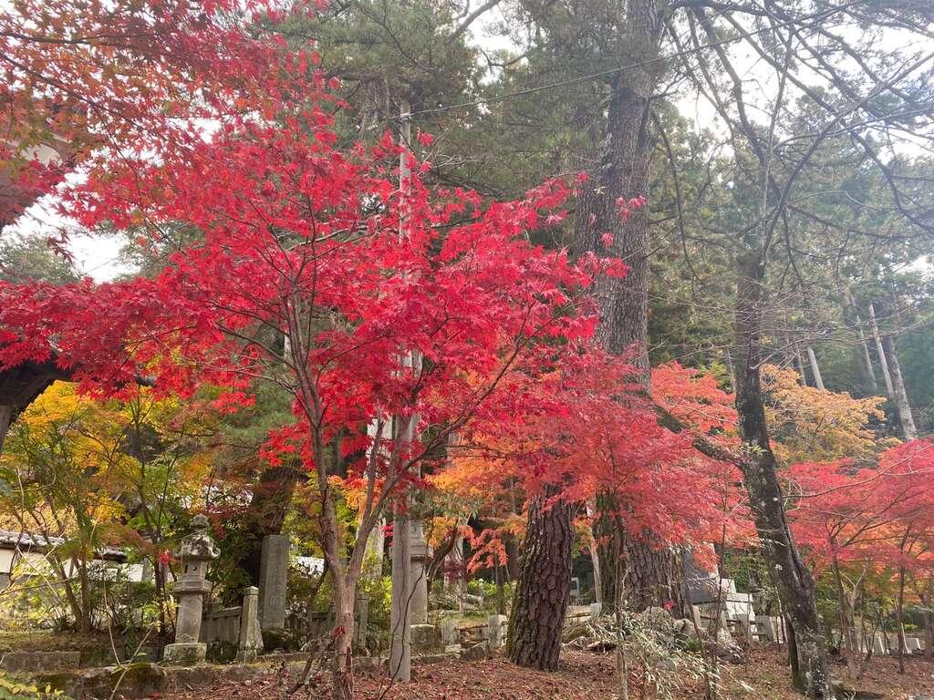 日蓮宗 安楽寺の自然