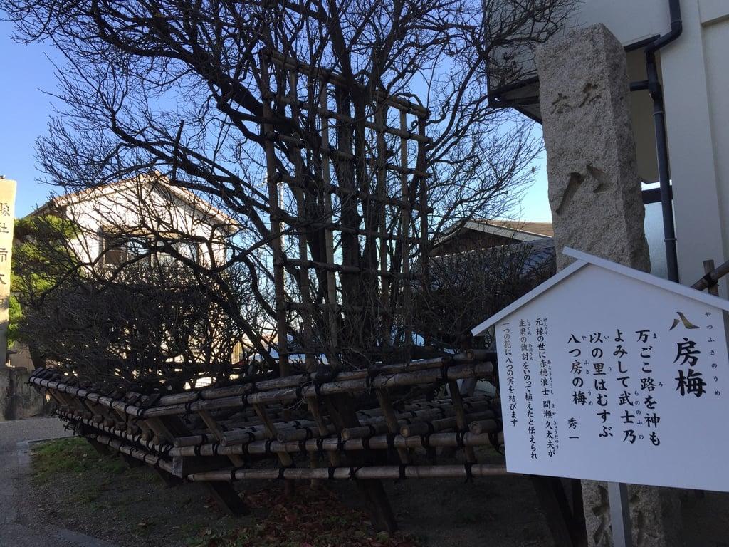 柿本神社の自然