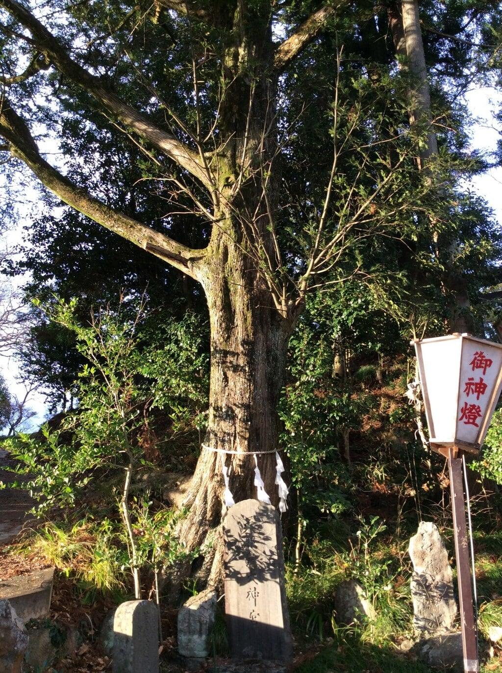 鹿島神社の自然
