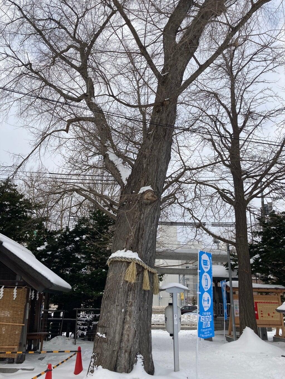 札幌諏訪神社の自然