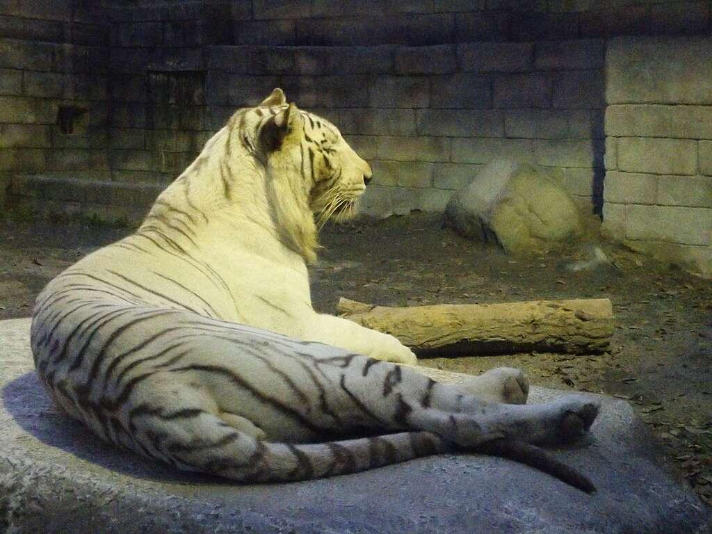 白虎神社の動物