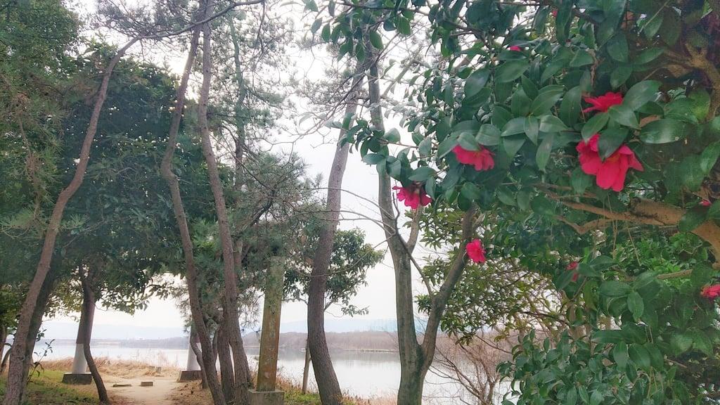 若宮神明社の景色