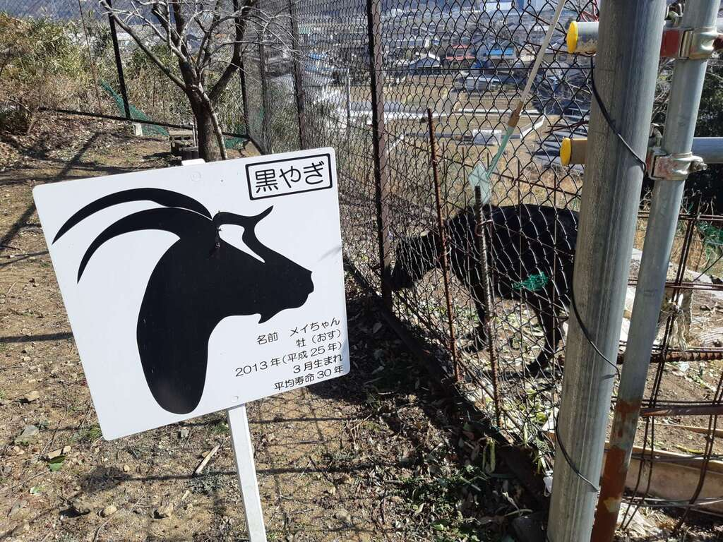加茂別雷神社の動物