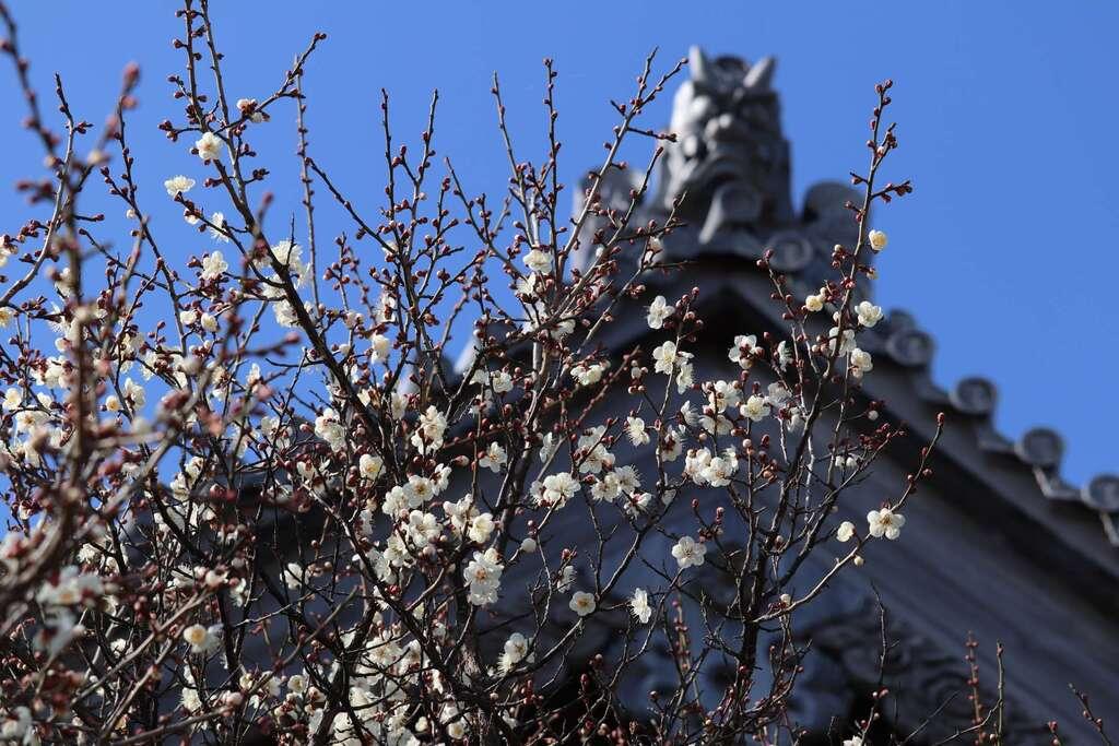 法話と天井絵の寺 觀音寺の自然