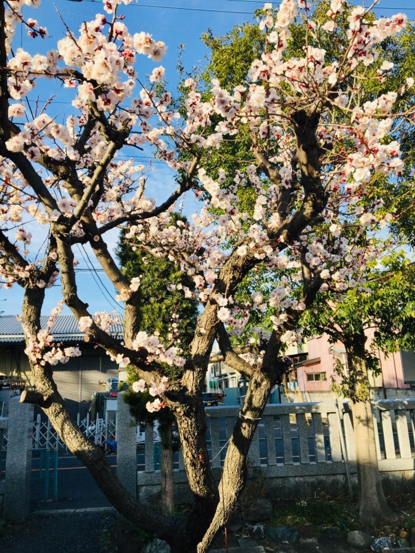 朝日氷川神社の庭園