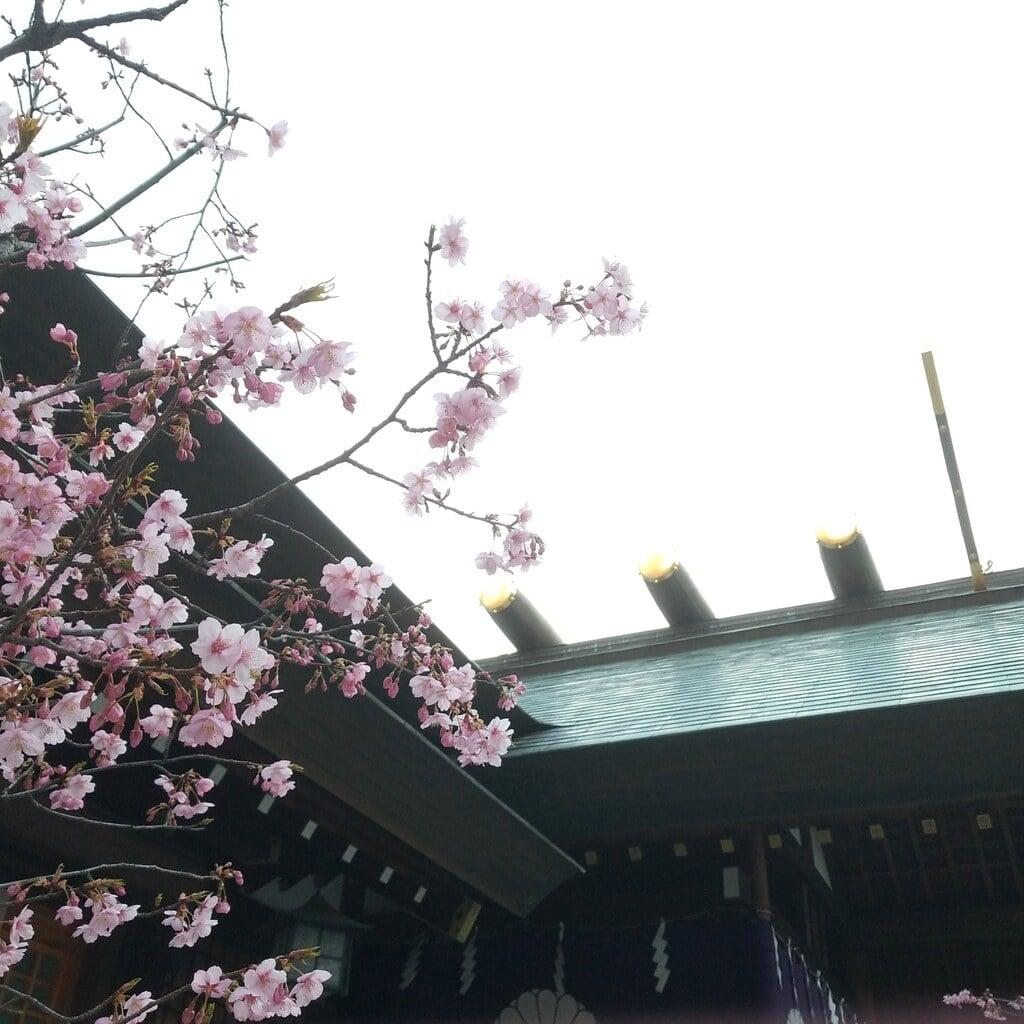 東京大神宮の自然