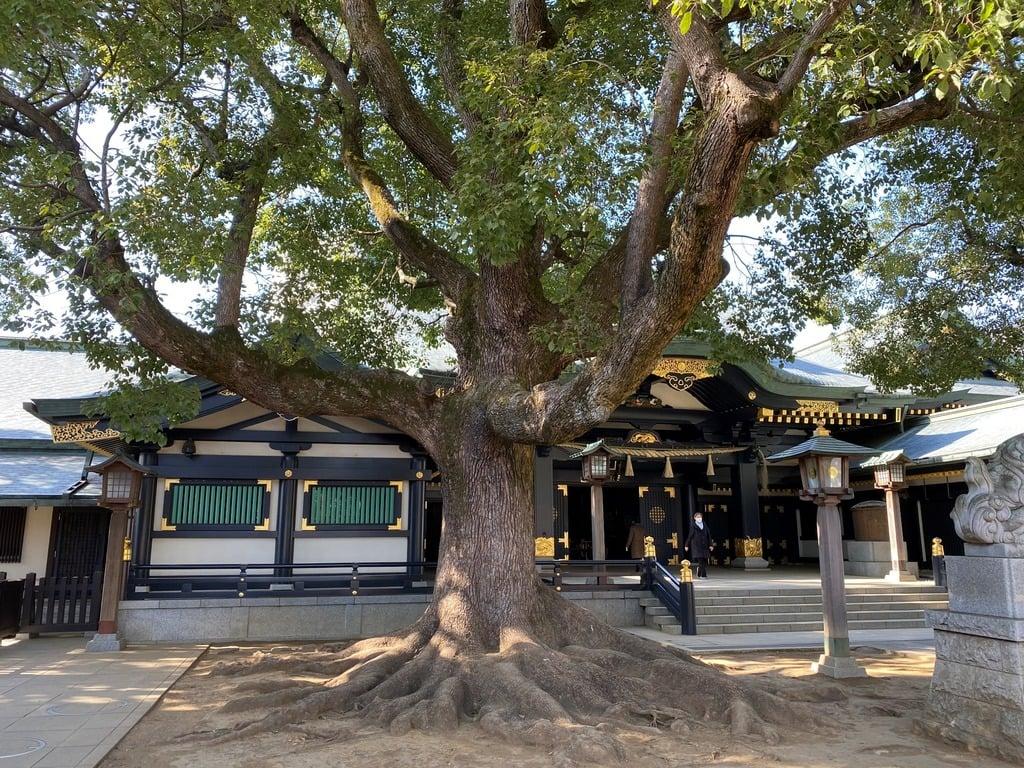 穴八幡宮の自然