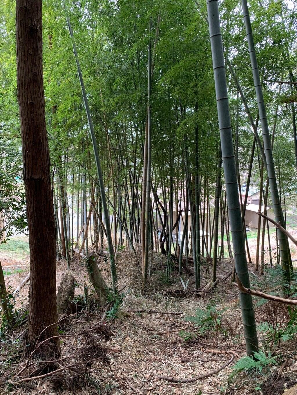 歓喜院(千葉県)