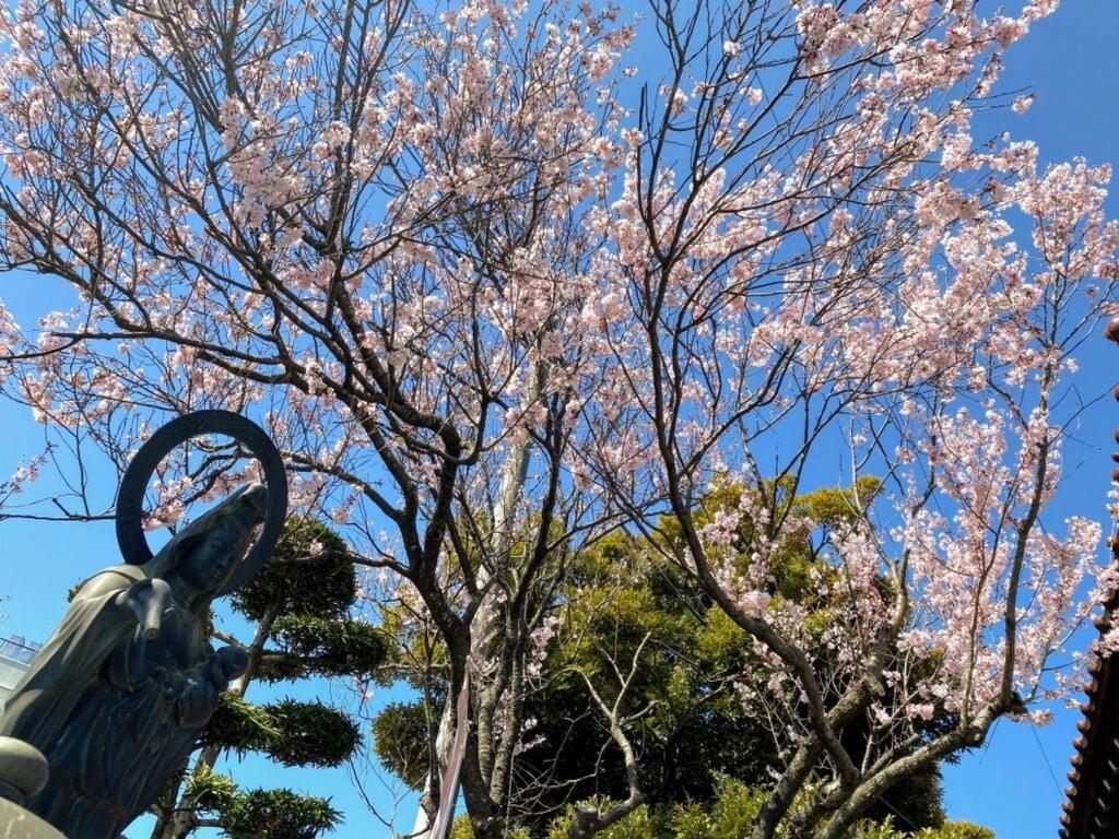 満福寺の自然